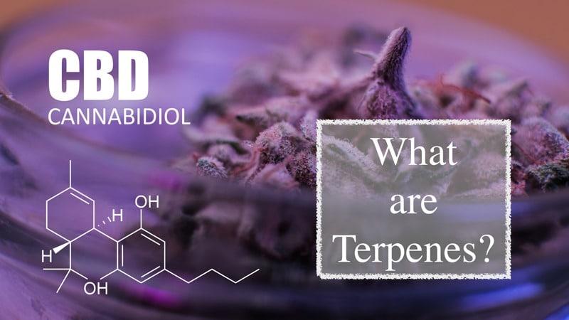 CBD Today & All New Terpenes